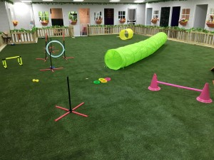 K9 Turf artificial grass indoor agility arena.