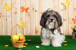 Is AstroTurf bad for dogs