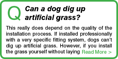 Can dogs pee and poop on artificial grass? We tell you the right answers